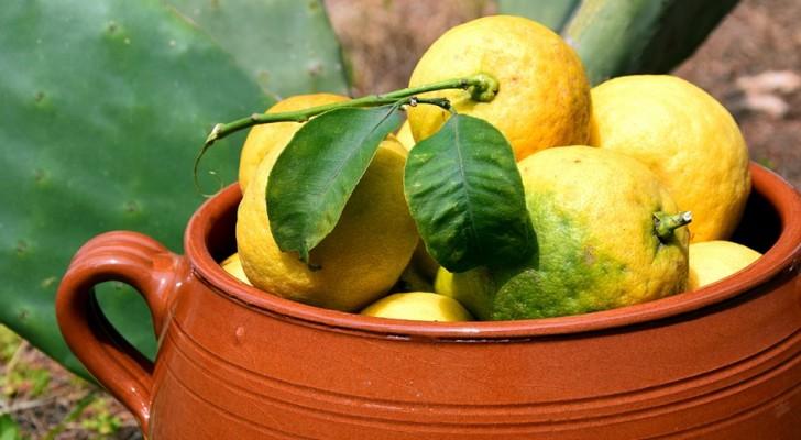 Så här kan man odla ett citronträd hemma för att aldrig mer behöva köpa dem