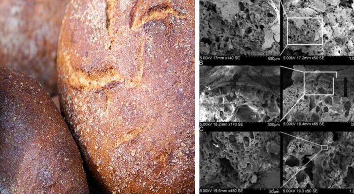 Archeologen hebben brood gevonden dat van 14.000 jaar geleden dateert, lang vóór de landbouwrevolutie