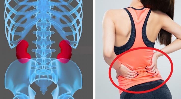 Die Nieren sind grundlegende Organe: Hier sind 8 einfache Gewohnheiten, um sie gesund zu halten