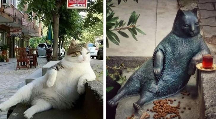 Un famoso gato viene a faltar: la ciudad lo recuerda con una estatua en su lugar preferido