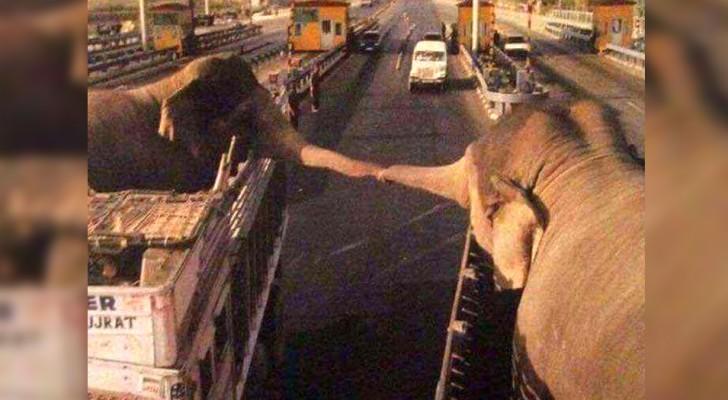 Due elefanti si tengono per mano in segno di addio: la foto diventa virale e solleva enormi polemiche