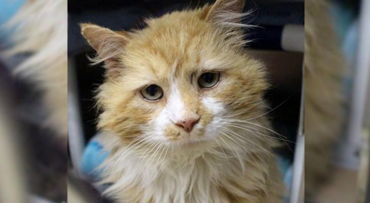 En katt förflyttar sig 20 km för att återvända till sin familj, men de ber om att få avliva den