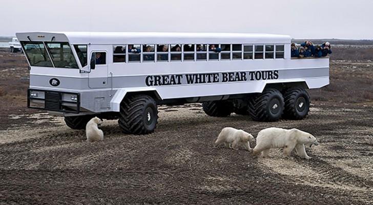In diesem mobilen Hotel können Sie in der Tundra schlafen, umgeben von Eisbären