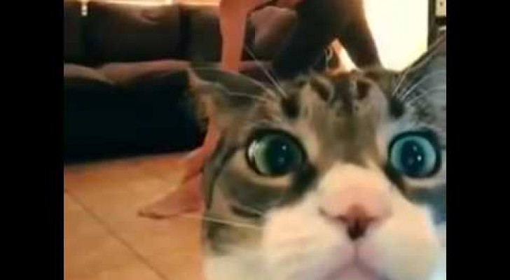 Funny cat interrups the yoga session !!