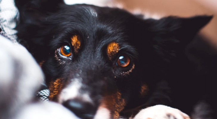 Din hund förstår dina känslor bara genom att lukta på dig enligt vetenskapen