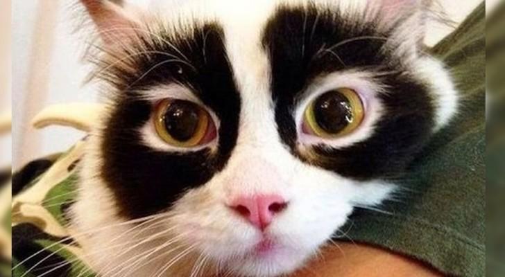 21 katter som Moder Jord har valt att ge en lite ovanlig päls