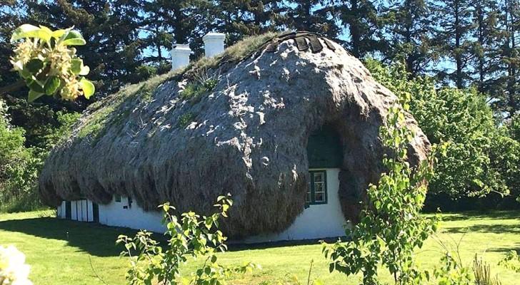 De oude Deense traditie van huizen met zeewierdaken: de foto's lijken afkomstig te zijn uit een sprookje