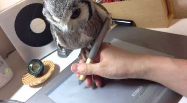 This cute owl really loves his owner