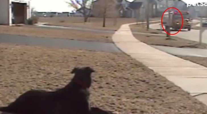 Every day this dog waits for his best friend to come home from school !