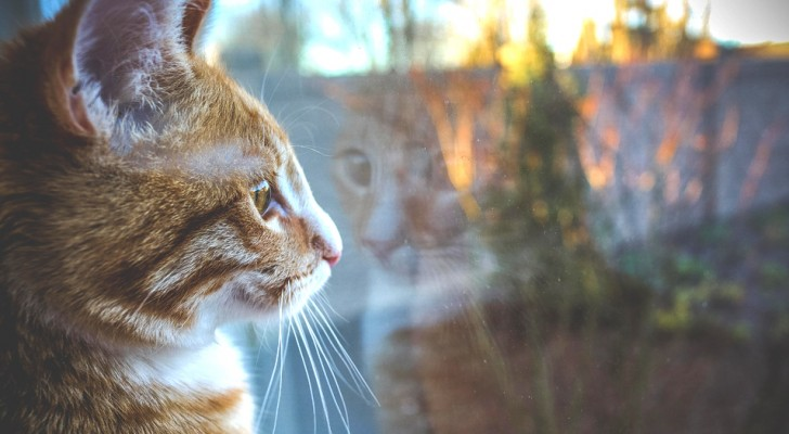 Avoir un chat dans la maison chasse la négativité : ils chassent les mauvais esprits et sont bons pour l'âme