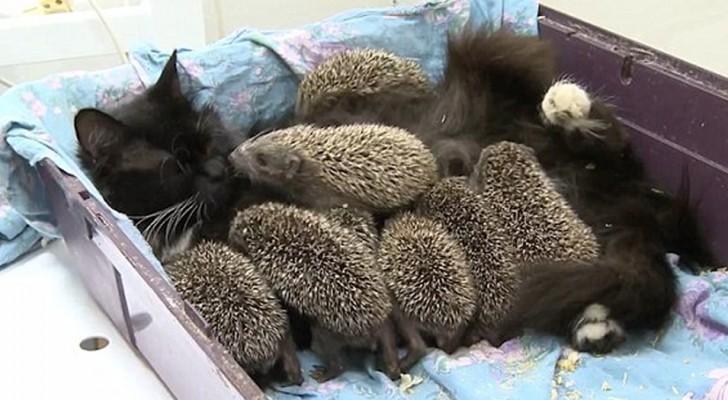 Os filhotes ficaram órfãos, mas a mãe adotiva chega para salvá-los