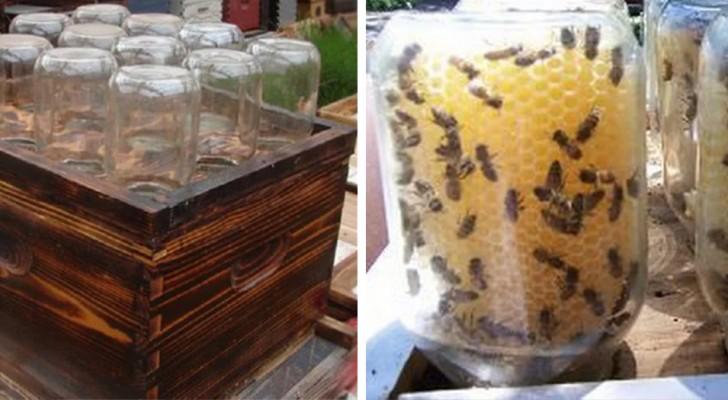 Cette ruche faite maison pourrait nous aider à sauver les abeilles et à protéger notre environnement