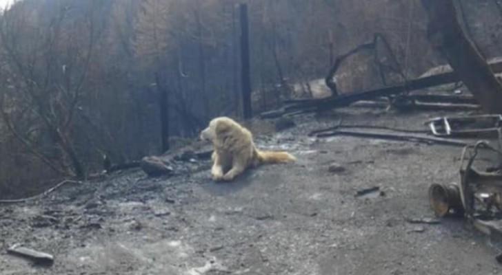 Un chien attend des semaines le retour de ses maîtres, malgré que les flammes aient détruit toute la maison