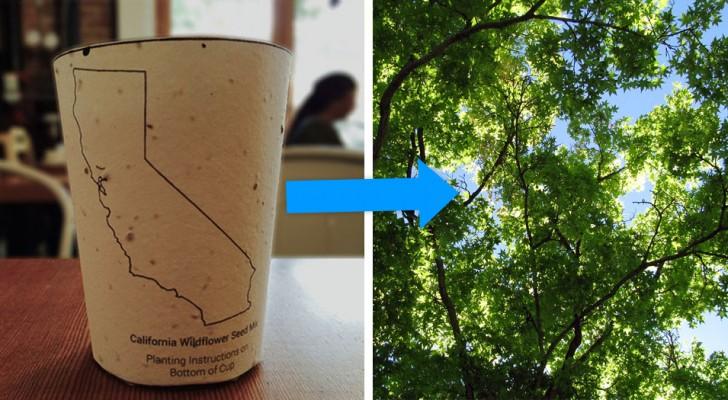 Ces tasses à café biodégradables contiennent des graines : quand on les jette, elles deviennent des arbres