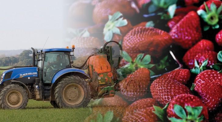 Dies ist das Obst und Gemüse, das durch Bio-Produkte ersetzt werden sollte, weil es so sehr mit Pestiziden verunreinigt ist