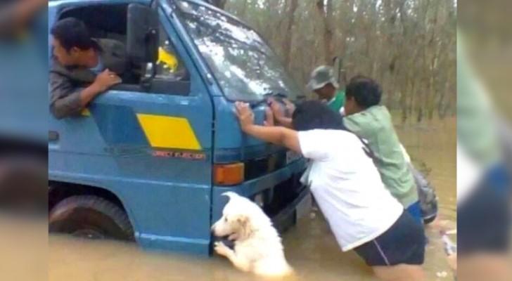 Un cane aiuta i suoi padroni a spingere il camion sotto la pioggia battente: la foto vale più di mille parole