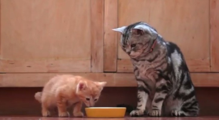 Dear Kitten: a welcome letter from an older and wiser cat