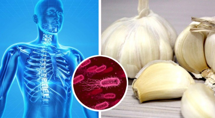 11 antibiotici naturali che ci aiutano ad eliminare i batteri dal nostro corpo senza utilizzare farmaci