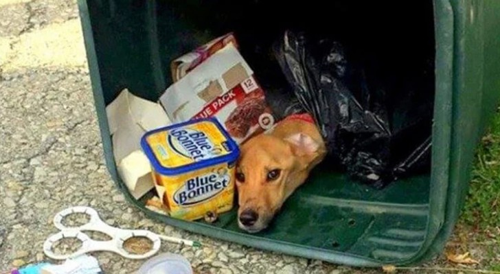 Una mujer se desembaraza de su perro tirandolo en la basura: lo encuentran luego de 6 días casi muriendo