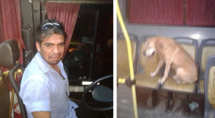 O motorista do ônibus vê um cachorro na chuva: uma mulher consegue fotografar o seu gesto comovente