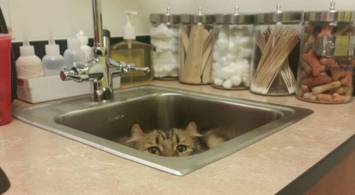20 urkomische Bilder von Katzen, die (unnötigerweise) versucht haben, sich vor ihren Tierärzten zu verstecken