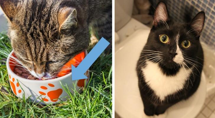 I 14 errori che i proprietari dei gatti commettono più comunemente con i loro amici felini
