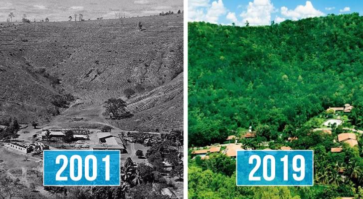 Ehemann und Ehefrau pflanzen in 20 Jahren 2 Millionen Bäume und erwecken einen ganzen Wald zum Leben