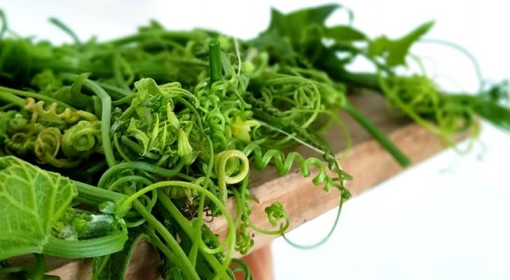 Questa pianta poco conosciuta elimina i batteri e migliora la flora intestinale: ecco tutti i benefici del quelite