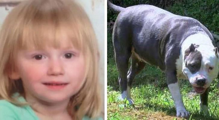 La niña desaparecida desde hace 2 días regresa a casa sana y salva: su pit bull la ha protegido día y noche