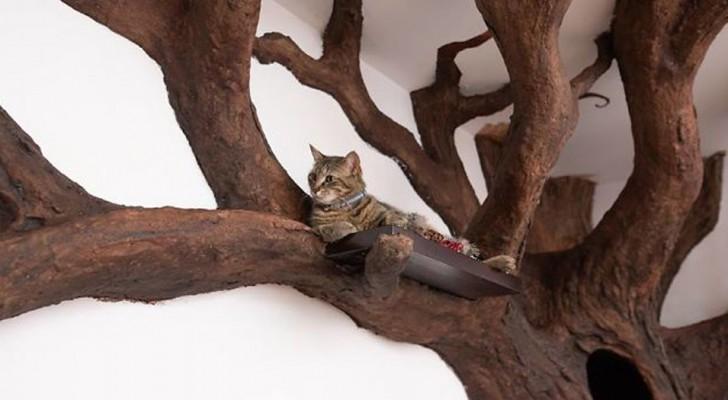 Un uomo ricrea un bellissimo albero nel salotto di casa, e il gatto sembra apprezzare molto il risultato finale