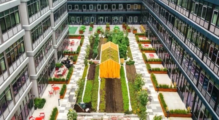 Questa zona residenziale ha un orto urbano di quasi 500 metri quadrati: le immagini sono sbalorditive