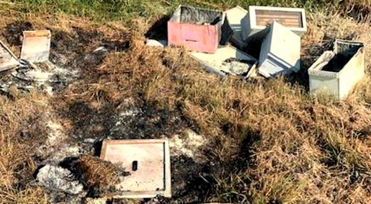 I vandali assaltano senza motivo decine di alveari: perdute per sempre più di 500.000 api