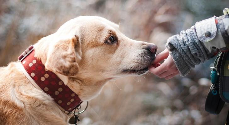 Ein Hund im Haus zu haben verlängert das Leben, zeigt eine Studie