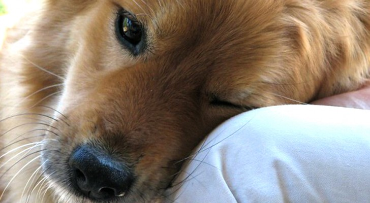 8 ways that your dog is telling you: I love You!