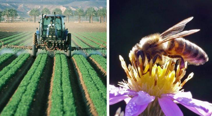 Een wiskundige ontwikkelt een natuurlijk bestrijdingsmiddel dat planten kan beschermen zonder bijen te doden