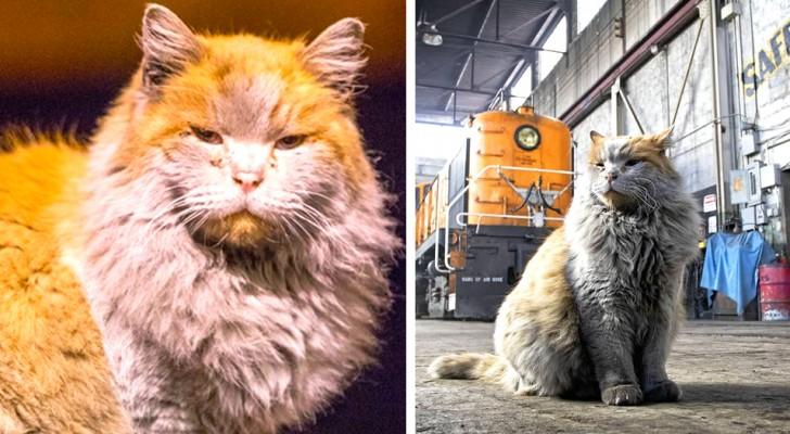 Questo gatto cresciuto in una stazione ferroviaria attrae i turisti sul posto grazie al suo incredibile aspetto