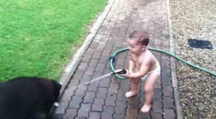 Séquence de pur bonheur: Jeu entre un enfant et ses labradors