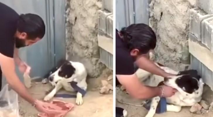 Un chien a vécu cruellement attaché et abandonné : le geste de cet homme nous donne une leçon à tous