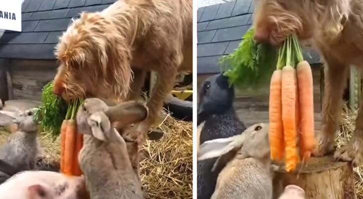 Il cane aiuta i suoi piccoli amici a sfamarsi: le dolcissime immagini hanno conquistato migliaia di persone