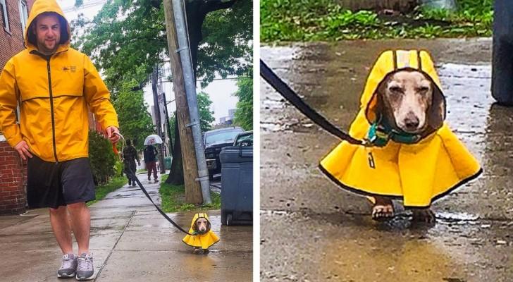 18 bezaubernde Fotos, die zeigen, wie weit die Liebe eines Menschen zu seinem Haustier gehen kann