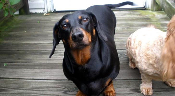Unsere Hunde verstehen, was wir ihnen sagen: Überraschende Studien zeigen das