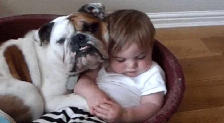 10 viktiga saker  som människor bör lära sig av hundar för att leva bättre
