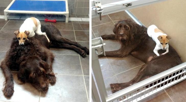 Seitdem sie dem Tierheim überlassen wurden, haben diese beiden Hunde nie aufgehört, sich gegenseitig zu umarmen