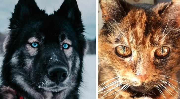 Ces 16 animaux à l'apparence unique prouvent que la nature a un côté artistique imprévisible