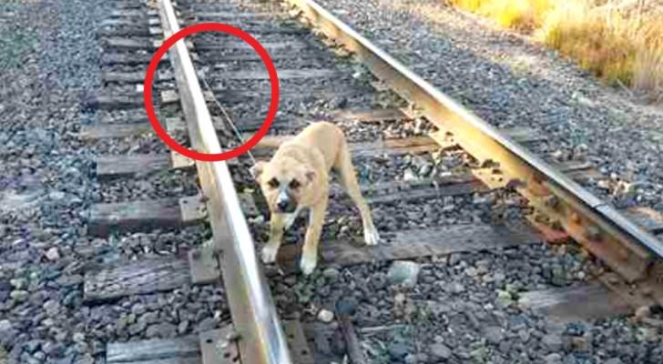 Deze hond werd achtergelaten op een spoorlijn, maar een man arriveert op het juiste moment en redt hem