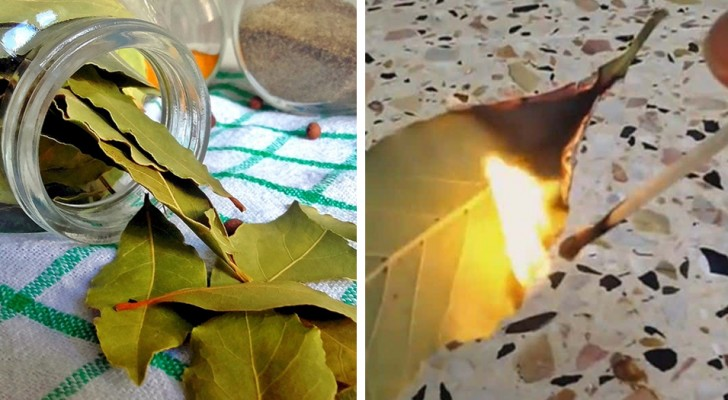 Here is how to dispel anxiety, stress, and fatigue by burning bay laurel leaves