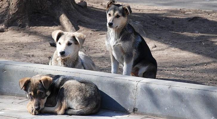 Eine Frau schluckt versehentlich die Pillen, die sie gekauft hatte, um streunende Hunde zu vergiften