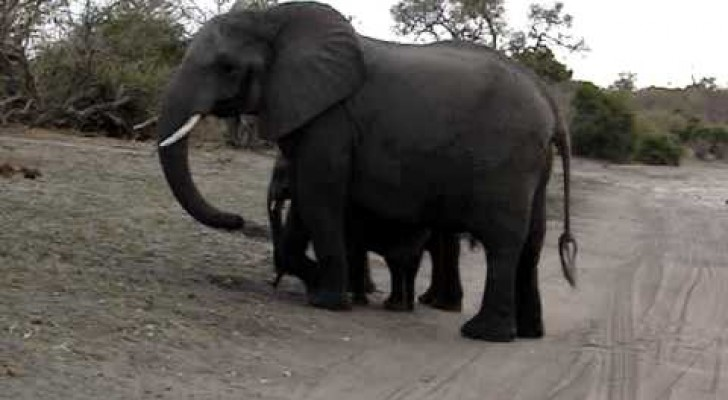 Le petit éléphant qui se fait peur tout seul