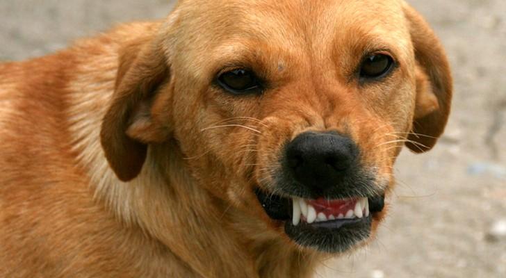 Dein Hund kann negative Personen erkennen und versucht, dich vor ihnen zu schützen: Dies wird durch wissenschaftliche Untersuchungen bestätigt