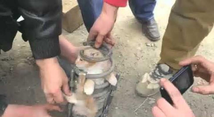 Teamarbeit für die Rettung einer Katze